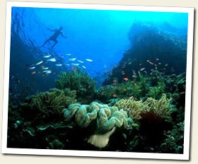 reef_of_bunaken