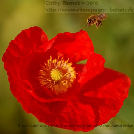 Blog photo macro nature: fleur et insecte
