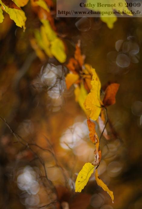 foret-rouge-poesie-amerindindienne-balade-automne-verzy-reims
