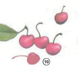 cherries <!  :en  >Fruits<!  :  > things english through pictures english through pictures