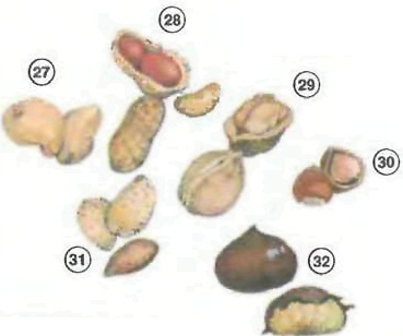 Nuts <!  :en  >Fruits<!  :  > things english through pictures english through pictures