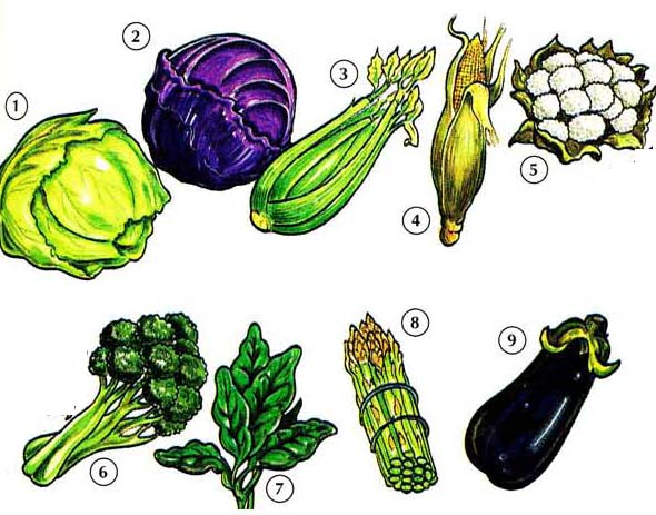 VEGETABLES 1 <!  :en  >Vegetables<!  :  > food 