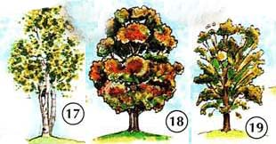 TREES%2C%20FLOWERS%2C%20AND%20PLANTS 4 <!  :en  >Trees, Flowers, Plants<!  :  > things english through pictures english through pictures