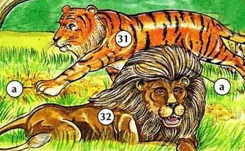 31. tiger  a. paw  32. lion  a. mane