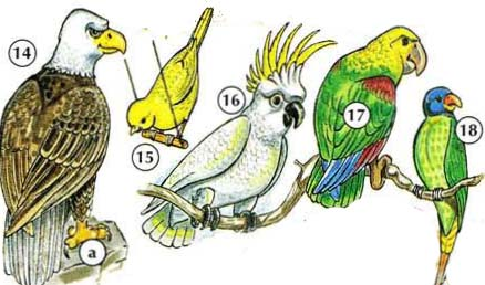 14. eagle a. claw 15. canary 16. cockatoo 17. parrot 18. parakeet