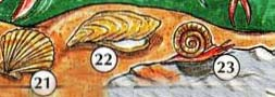 21. scallop 22. oyster 23. snail