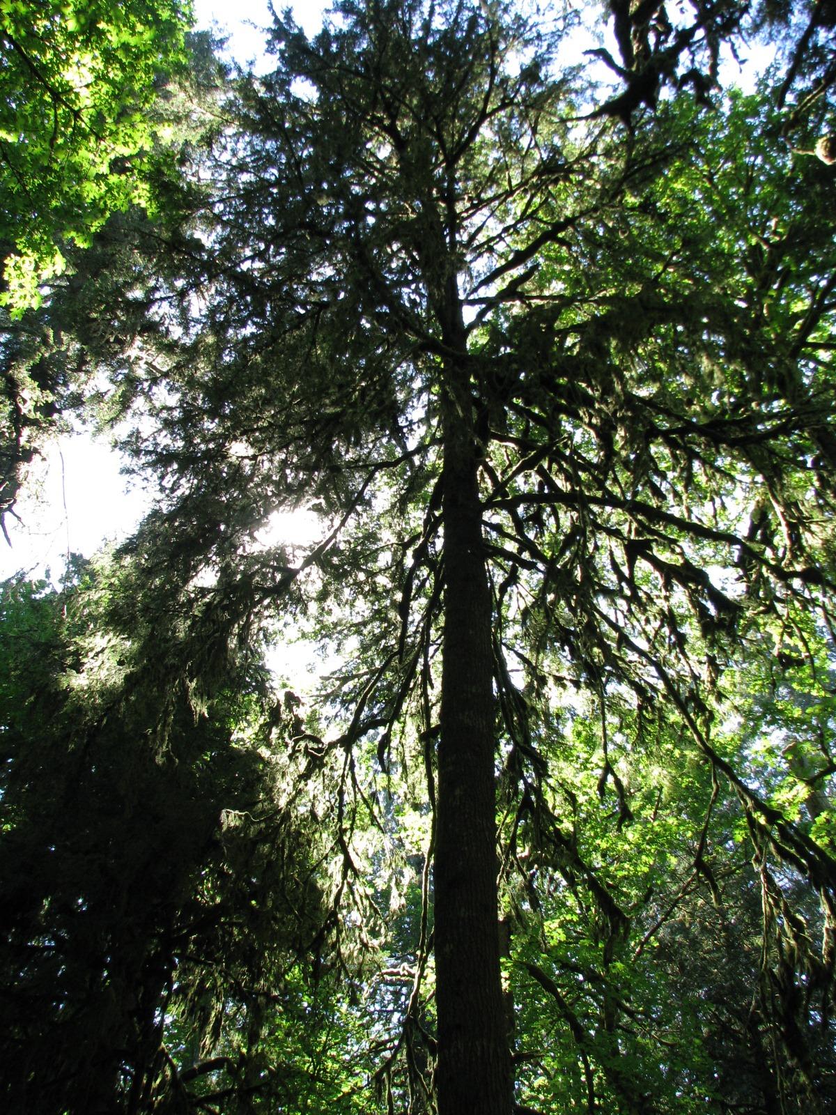 [OxBow Park Picnic 022[5].jpg]