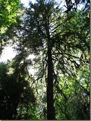 OxBow Park Picnic 022