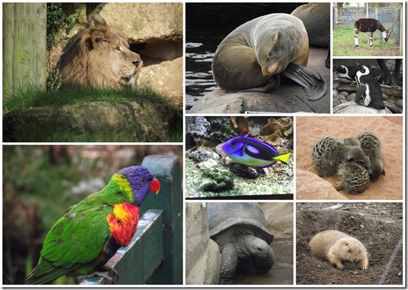 Bristol Zoo1
