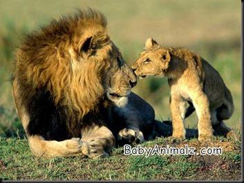 baby_animal-069