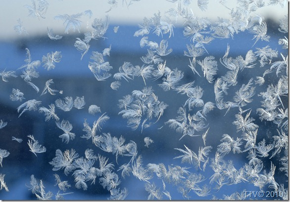 päivän jää kukat 018