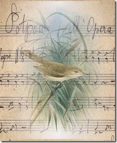 bird.musicsheet