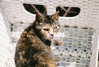 old, old feral cat grandmother