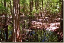 wetland 2