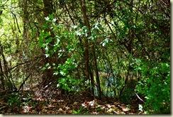 swampy area 1