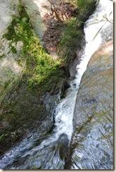 Rushing Water Moss