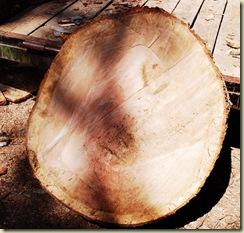 down oak 02