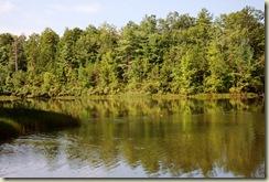 lake with ducks