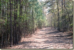 trail 01