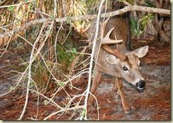 04a deer