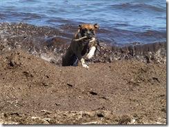 La playa tenía muchos restos de algas de ahí su color.