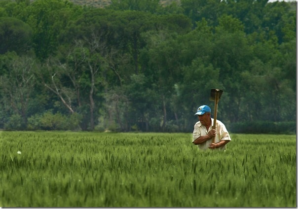 Agricultor en trigal