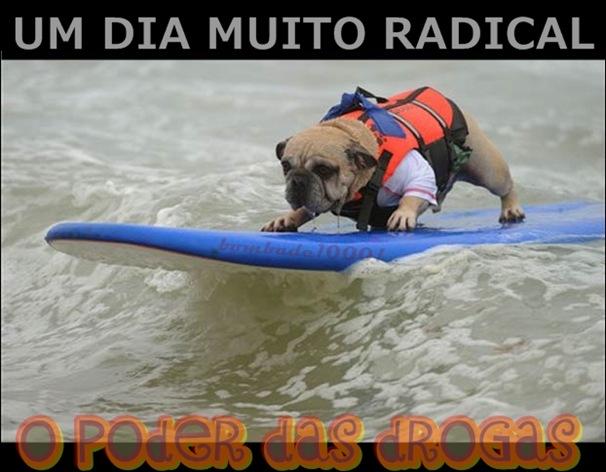 Cachorro na onda