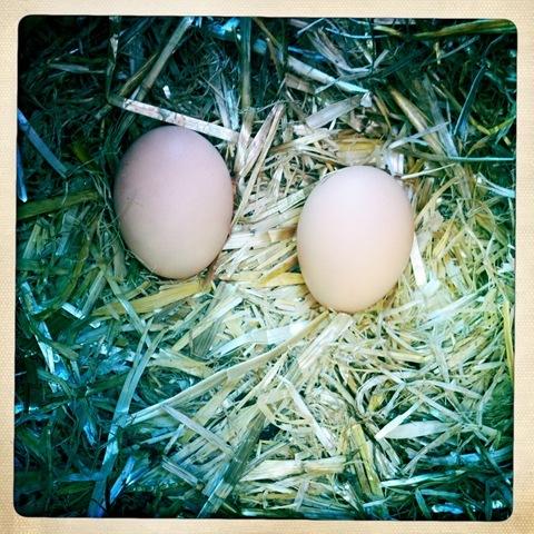April - eggs