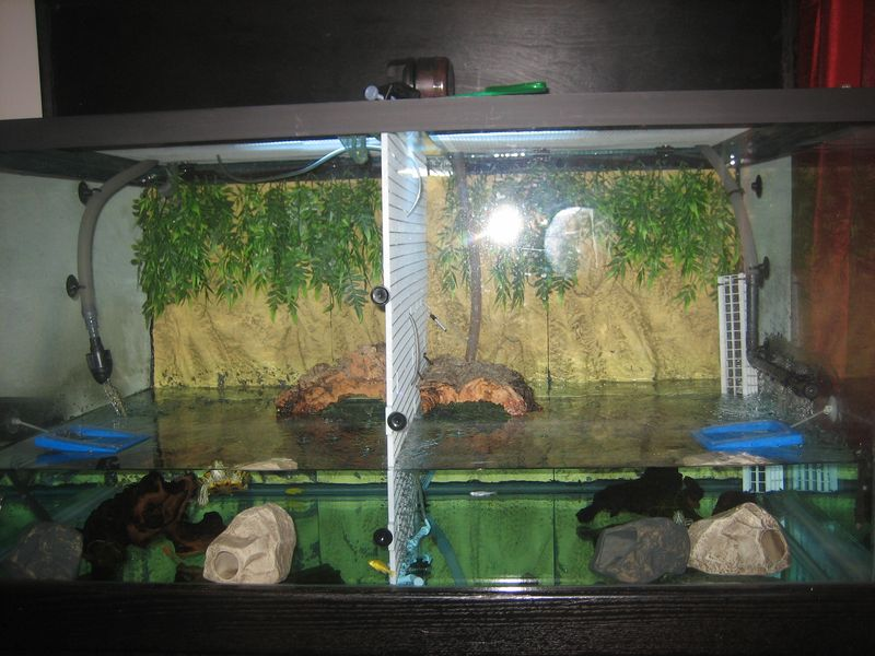 ... 150 gallon pet turtle tank - as first set-up Pet Turtles And More