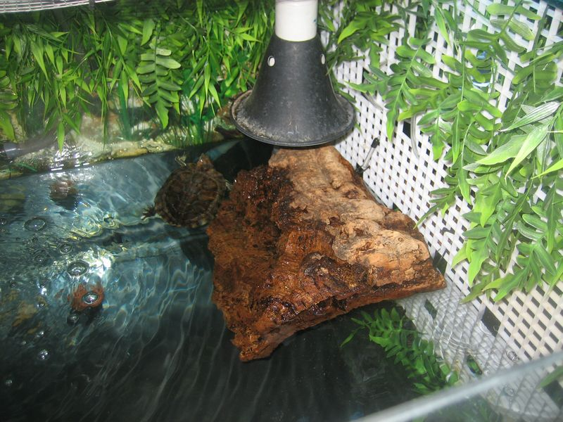RES turtle basking area made with corkbark