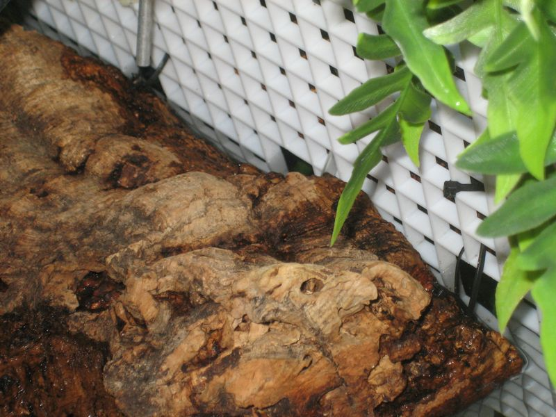 corkbark turtle basking area attached to eggcrate tank divider