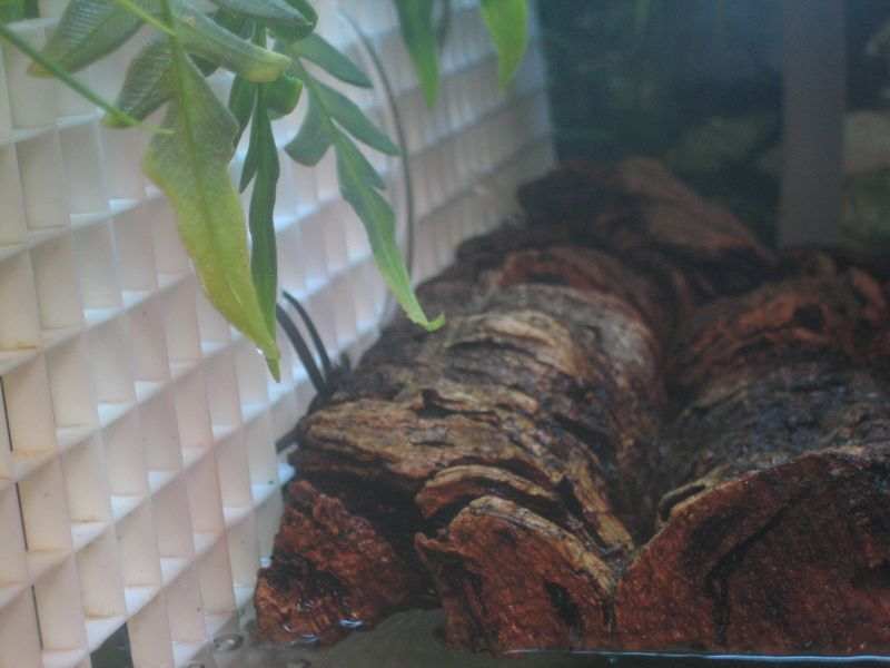corkbark turtle basking area attached to tank divider