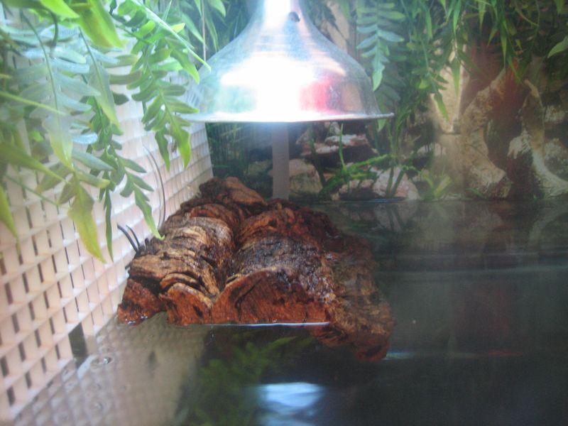 turtle basking area made with corkbark