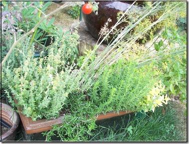 Herbs2009