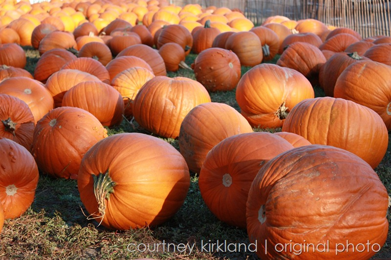 PumpkinPatch 107