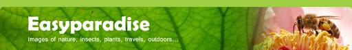 Easyparadise | 摄影,户外,旅行,动植物生态...
