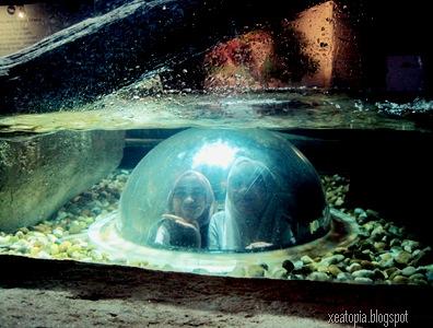 aquaria 038