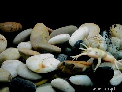 aquaria 073