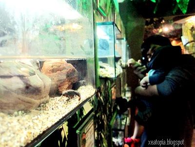 aquaria 074