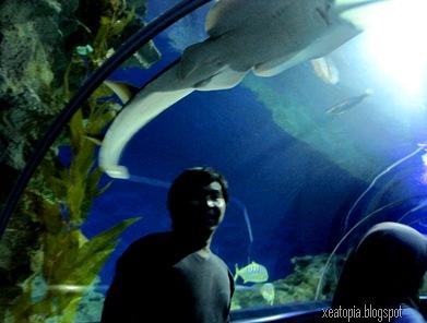 aquaria 133