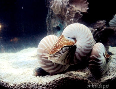 aquaria 165