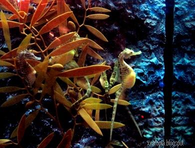 aquaria 166
