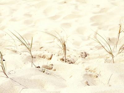Effet Néon sur  la plage P1010809_neon1