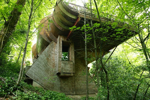 House Concept Architecture for the forest  | Tree House