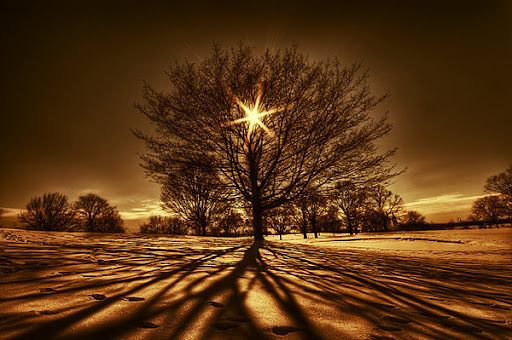 Tree Of Light by lowapproach 34 Wonderful Examples Of Nature Photography