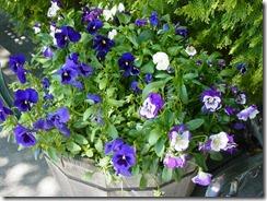 Kautzflowers 001