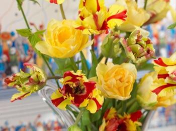fiori-10