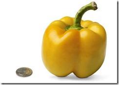 week 18 pepper