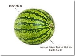 week_3_watermelon