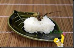 Sushi de Inseto 14